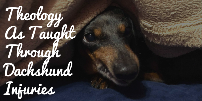 dachshund peering out from blankets with text